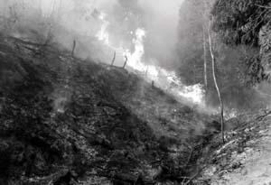 津田山火災